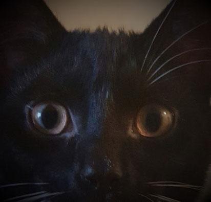 Wachsen Augenbrauen oder Schnurrhaare bei Katzen nach?