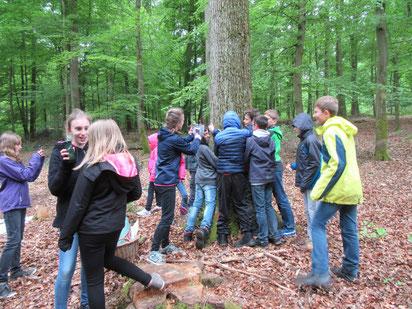 Waldpädagogik: Lernen in der Natur.