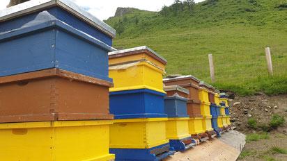 Das raue Gebirgsklima verlangt den Bienen und dem Imker vieles ab