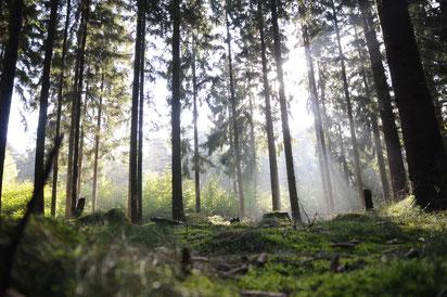 Es muss nicht immer nur die Heide sein. Auch die umliegenden Wälder in der Lüneburger Heide sind einen Spaziergang wert.