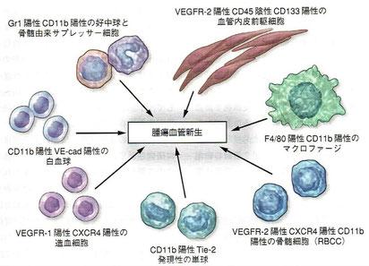 「デヴィータ がんの分子生物学」より