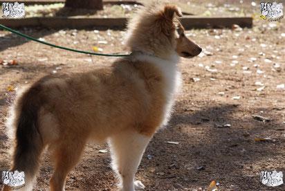 ec chiens cour en education canine pour fournir une bonne education chiot pour apprendre les ordres de base avec la methode du leadership training avec un dresseur de chien professionnel