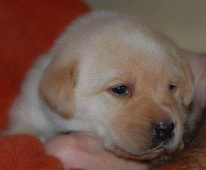 Naira, geboren am 14.01.2011