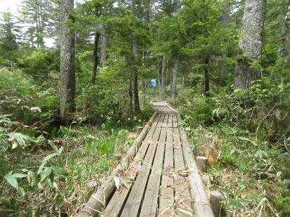 湿原に敷設された木道。