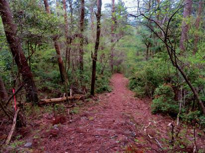 城山森林公園。