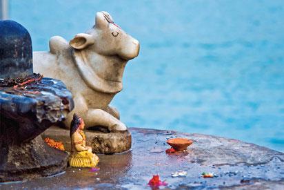 Yoga Sivananda Kuh