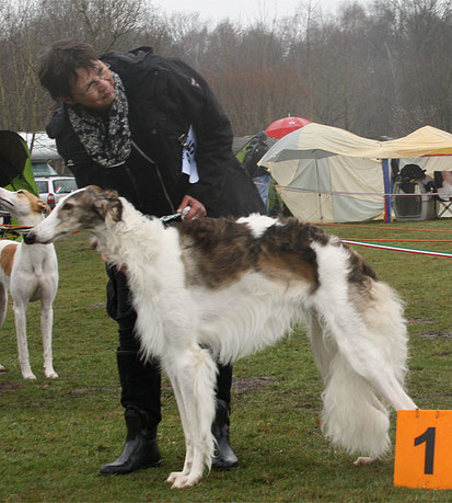Foto: copyright European Borzoi