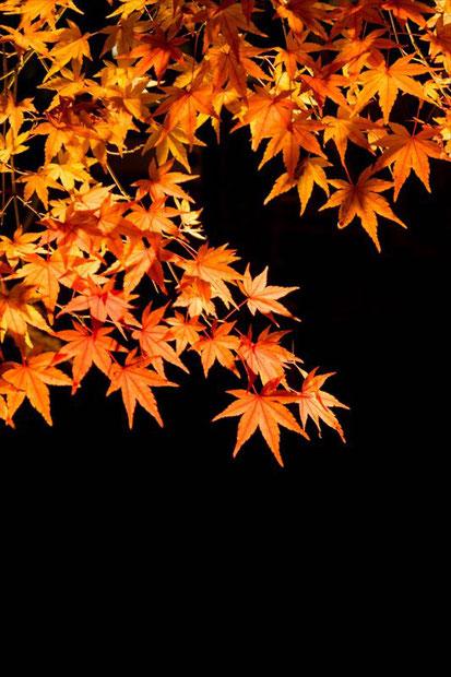 京都の紅葉ライトアップ