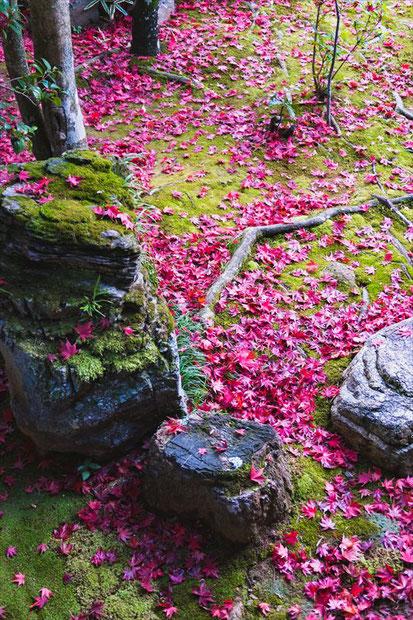 妙心寺塔頭大法院の苔と散紅葉