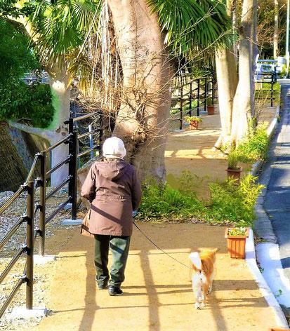 マサ土ほ装などをテスト中の「散歩道」