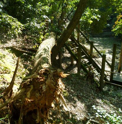【瀬川北公園】階段に倒れかかる倒木。他にも2~3本倒木(瀬川1丁目)