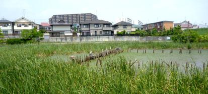 池の東側は、住宅地。