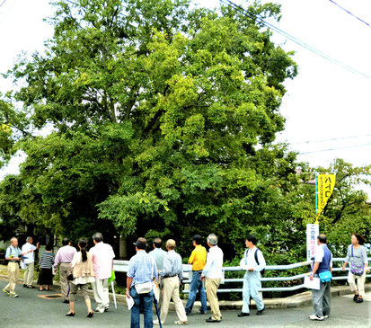 住民による川沿いの樹木チェック