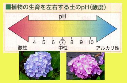 pHとアジサイの花の色の関係(pHの図は「ハイポネックス・ガーデンブック」から)