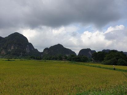 Reisfeld vor der Bich Dong Pagoda