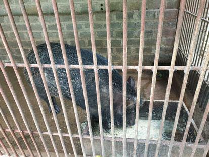 Wildschwein im Bird Park bei Tam Coc