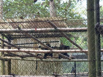 Affen in der Rettungsstation im Nationalpark von Cuc Phuong