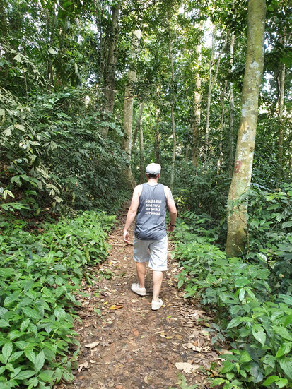 Weg durch den Dschungel im Cuc Phuong Nationalpark bei Tam Coc