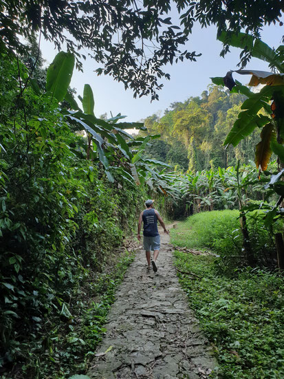 Bananenplantage im Cuc Phuong Nationalpark