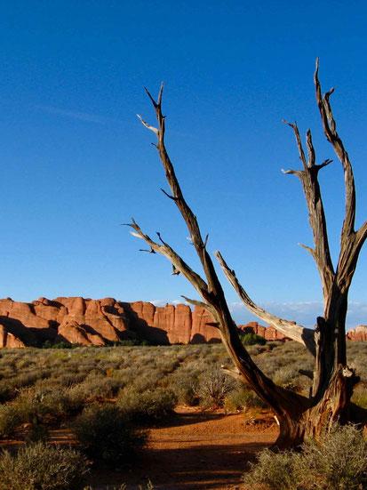 Westen der USA: Arches Nationalpark. Reiseberichte.