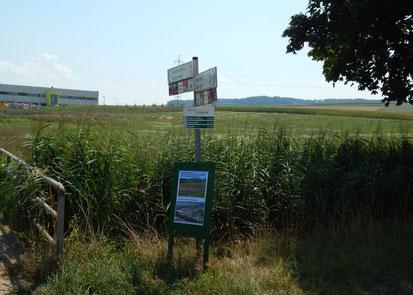 August 2018: Noch gibt es ein breites Stück Grünland zwischen TAXIS und dem Fürtlesbach. Ab und zu weiden Schafe darauf.