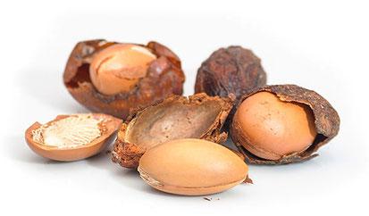 Fruto y almendra del argán. Moroccan Biocosmetic.