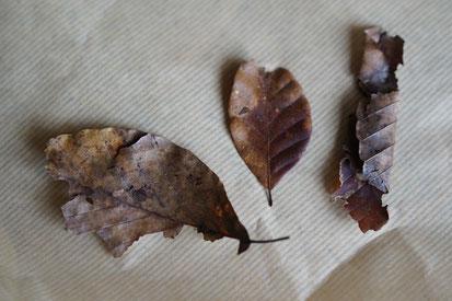 仲本律子 R工房 女性陶芸家 ブログ 秋田 きりたんぽ 舞茸 せり 白神山地のブナの落ち葉