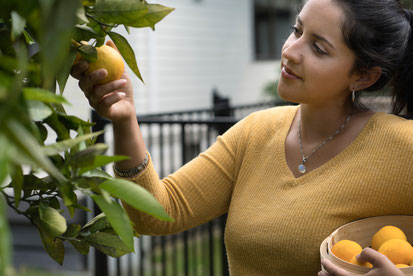 Woman in garden picking lemons