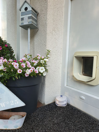 Cat Door Bell von Innov Advance