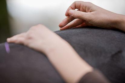 Akupunktur beim Hund und Pferd durch einen Tierarzt
