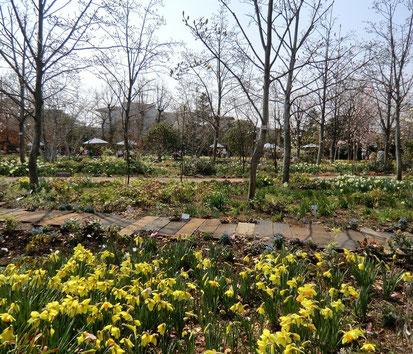 ●水仙も咲いていました