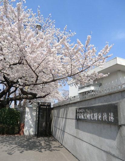●東八道路と三鷹通りの交差点の近くにあるJAXAも桜が満開でした