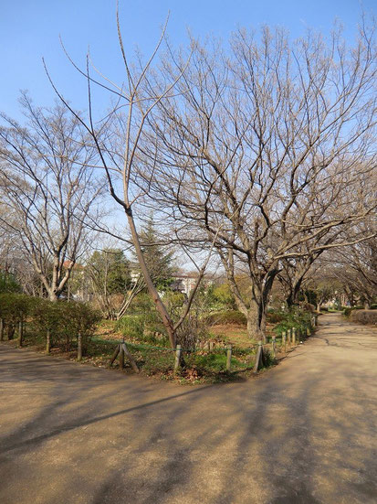 ●武蔵野中央公園には、井の頭通りからグリーンパーク遊歩道で行きました