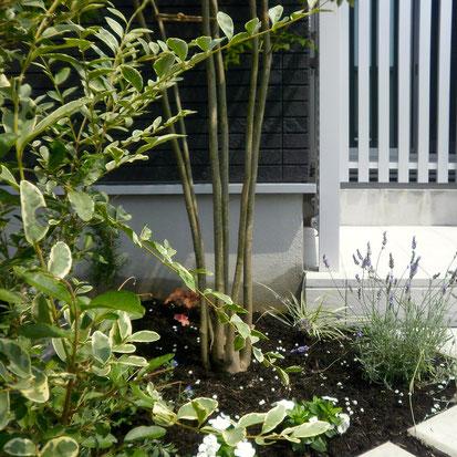 植栽工事のタイミング