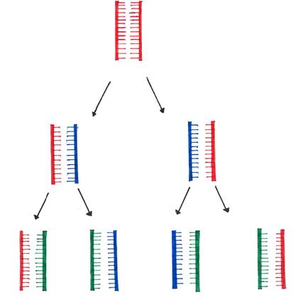 Abb. 1: Übersiche semikonservative Replikation der DNA