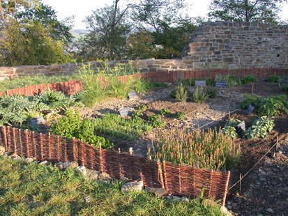 Der Garten im ersten Jahr (Foto: J. Oppermann)