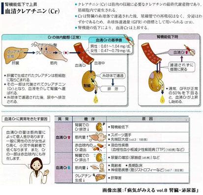 血清クレアチニン(Cr)