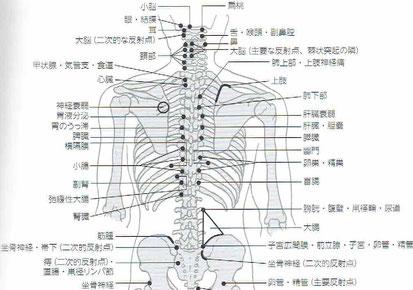 「内臓 治療 反射点」の画像検索結果