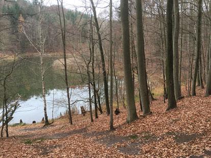 Baasee Wald Waldschänke Märkisch Oderland (Oderbruch-blog.de)