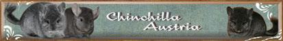 chinchilla Austria