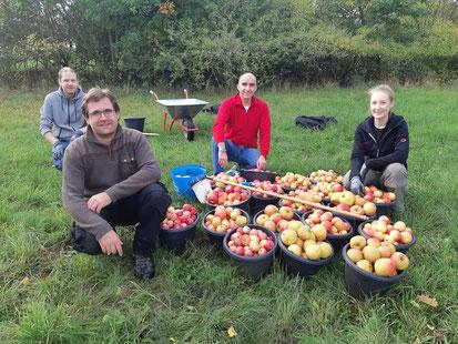 Apfelernte in Dippoldsberg (Bild: Simone Reuter)