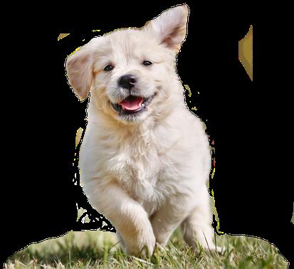 Hundeschule Bremen - Hundeschule MOMO