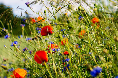 Hypnosetherapie hilft gegen Allergien