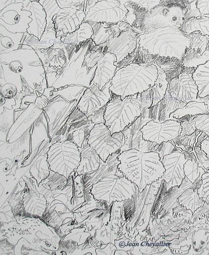 Détail d'un crayonné d'illustration, taille réelle, Jean Chevallier