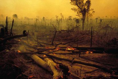 Deforestation en Amazonie pour l'agriculture, au Bresil. • Crédits : Getty