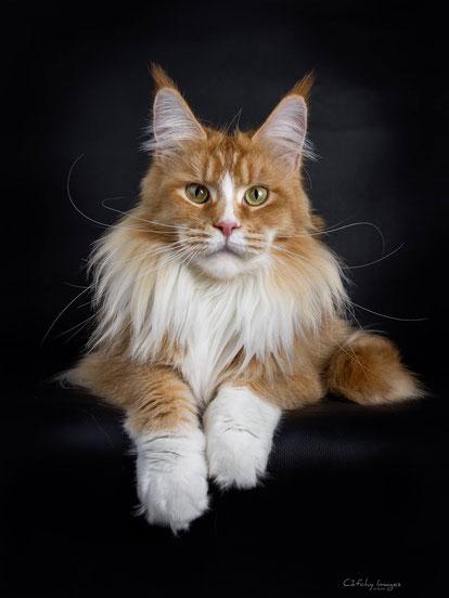 Fotovorlage für das Katzengemälde WuffMiau