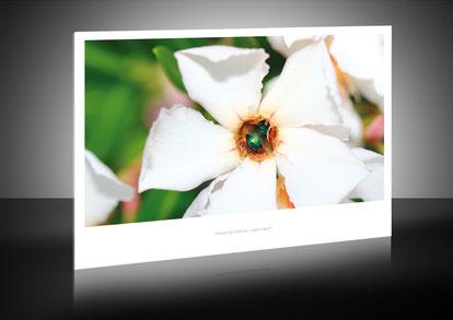 Beispielbild mit Passepartout-Optik