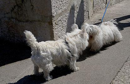 Hundebegegnungstraining