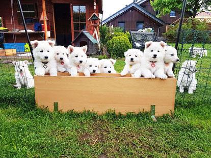 Nachwuchs Hundebabys Solarterrassendach