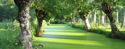 la venise verte, les canaux, le marais poitevin